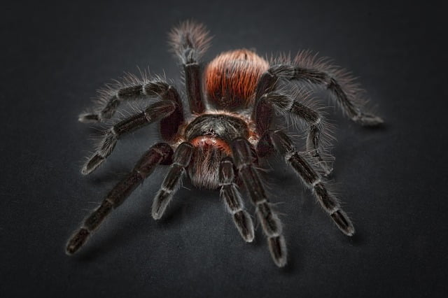 Ilustrasi Entomofobia: Definisi, Penyebab & Pengobatan